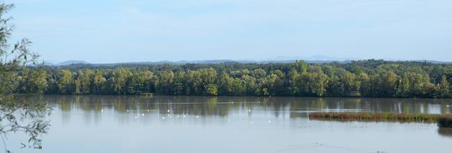 Wasser Vögel Auwald Aussicht_Herbert Stolz_c Tourismusverband Ostbayern